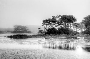 23 -Foggy Chincoteague NWR